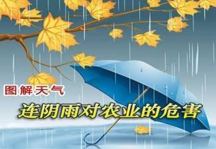 连阴雨对农业的危害 ()