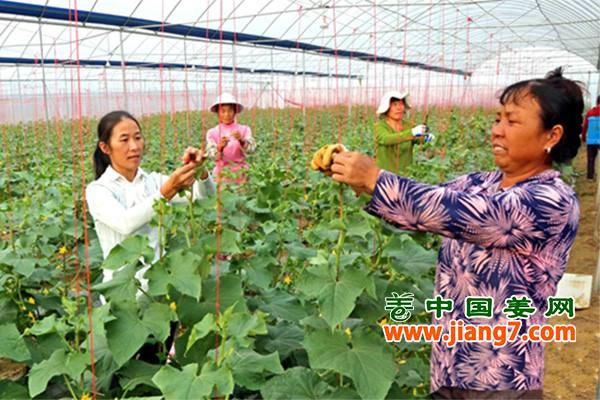 万亩蔬菜富民美村 ()