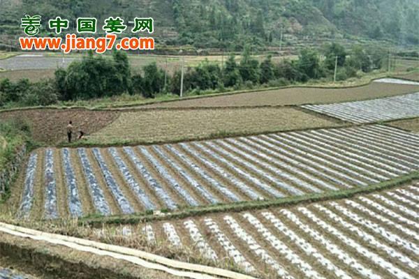 贵州镇宁:蔬菜脱贫攻坚战打响