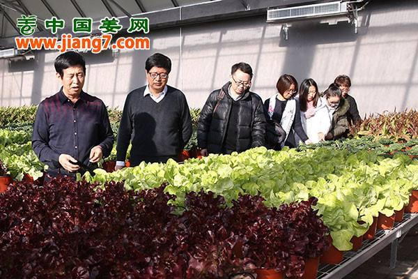 北京:废弃物变废为宝,蔬菜 ()