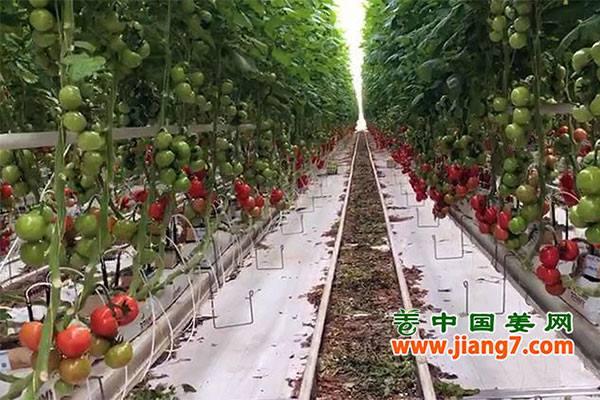 德州:现代化蔬菜设施推动农业发展