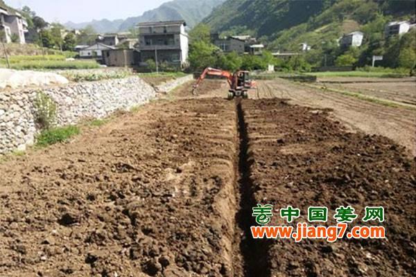 重庆:脱贫生姜攻坚战打响