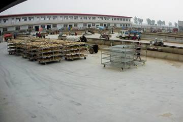 莱州金大宏大姜批发市场(1) ()