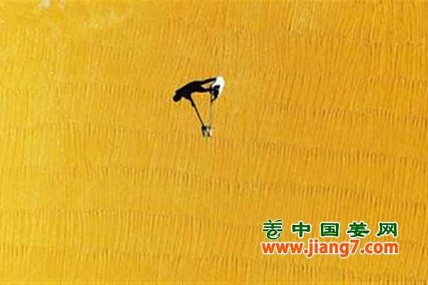 """农民的节日:""""中国农民丰收节"""""""