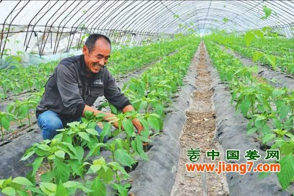 绥化:品牌蔬菜闯出大名堂! ()