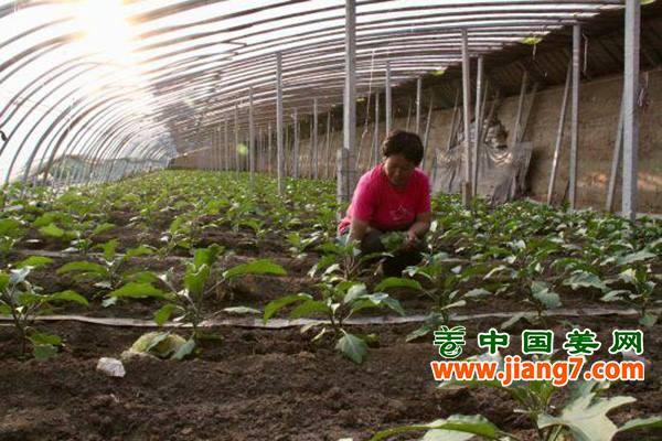 北京:菜价回落明显 ()