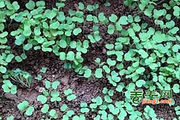 提高土壤透气性,改善根系活力 ()