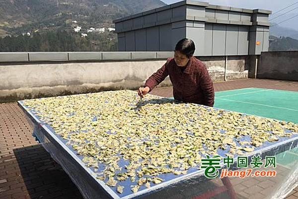 武隆:山地蔬菜促进增收