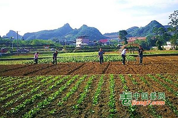 湖北:建设高效示范菜园带动增产增收