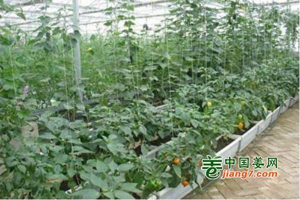 常德大力打造优质蔬菜种植基地