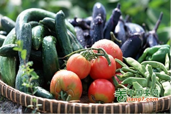 双节来临 蔬菜供应量足价稳