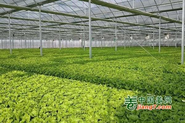 """宿迁:打造""""移动蔬菜""""新名片 ()"""