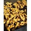 山东莱州大量优质大姜低价出售