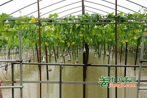 浙江:多举措保证汛期蔬菜平稳供应