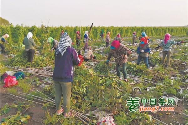 东北五常:扩菜减粮 发展致富路 ()