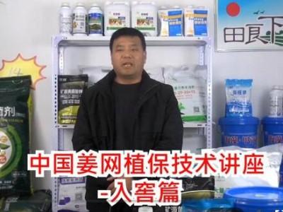 生姜植保技术——入窖篇