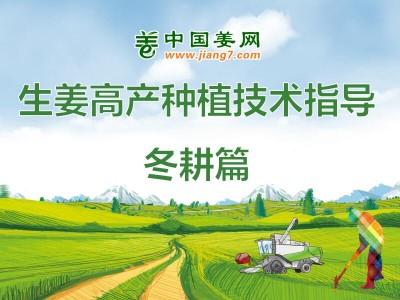 生姜高产植保技术——冬耕篇