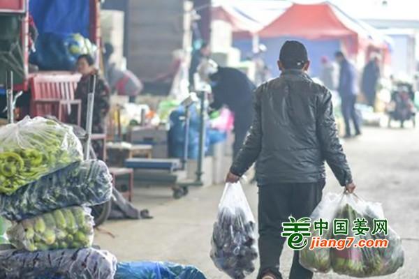 济南:节后菜价大降