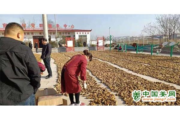 河南:彭店镇大力发展生姜种植产业 ()