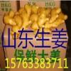 山东生姜产地 山农一号,高产368姜种,山东小姜价格,姜巴