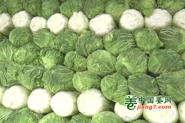 唐山乐亭:窖藏白菜错季卖好价 ()