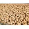 莱芜优质姜种