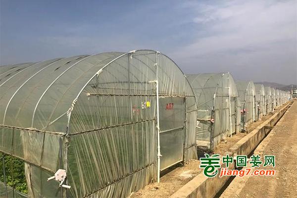 云南祥云:大棚白菜产业兴旺