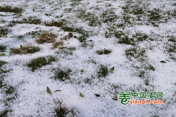 突发!文山突降冰雹致万亩农作物受灾
