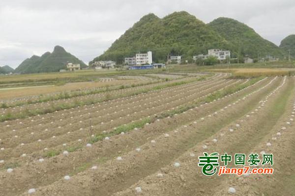 贵州安龙县:烤烟+蔬菜助力乡村振兴