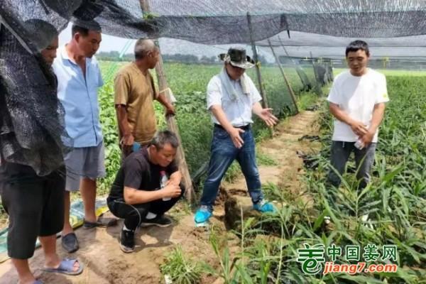 中国姜网生姜基地调研--走进河南 ()