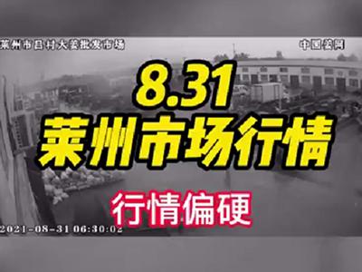 8月31日 莱州生姜交易实况(行情偏硬) ()