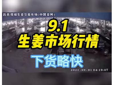 9月1日 昌邑生姜交易实况(下货略快) ()