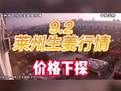 9月2日 莱州生姜交易实况(价格下探) ()