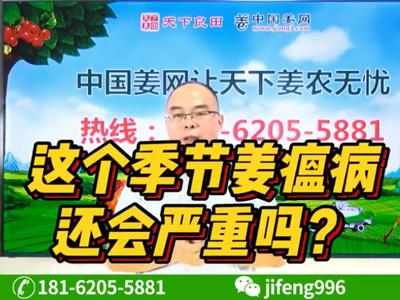 这个季节姜瘟病还会严重吗?