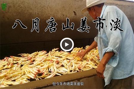 八月唐山姜市淡 ()