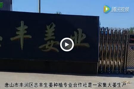 唐山市丰润区志丰生姜种植专业合作社 ()